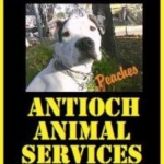 Find your Best Friend at the Antioch Animal Services Center