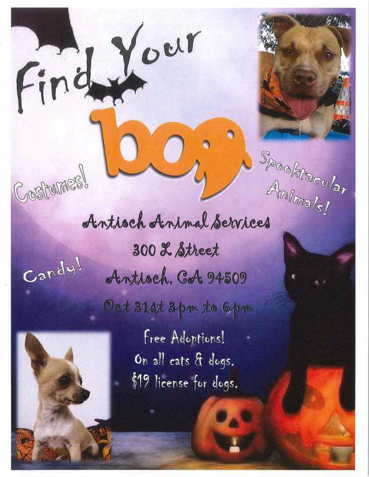 Antioch Animal Services Halloween Event