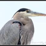 Birding at Dow Wetlands