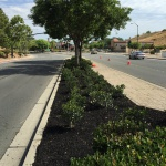 Antioch Public Works focuses on Landscaping