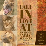 Fall In Love at Antioch Animal Services