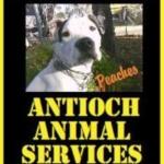 Antioch Animal Shelter