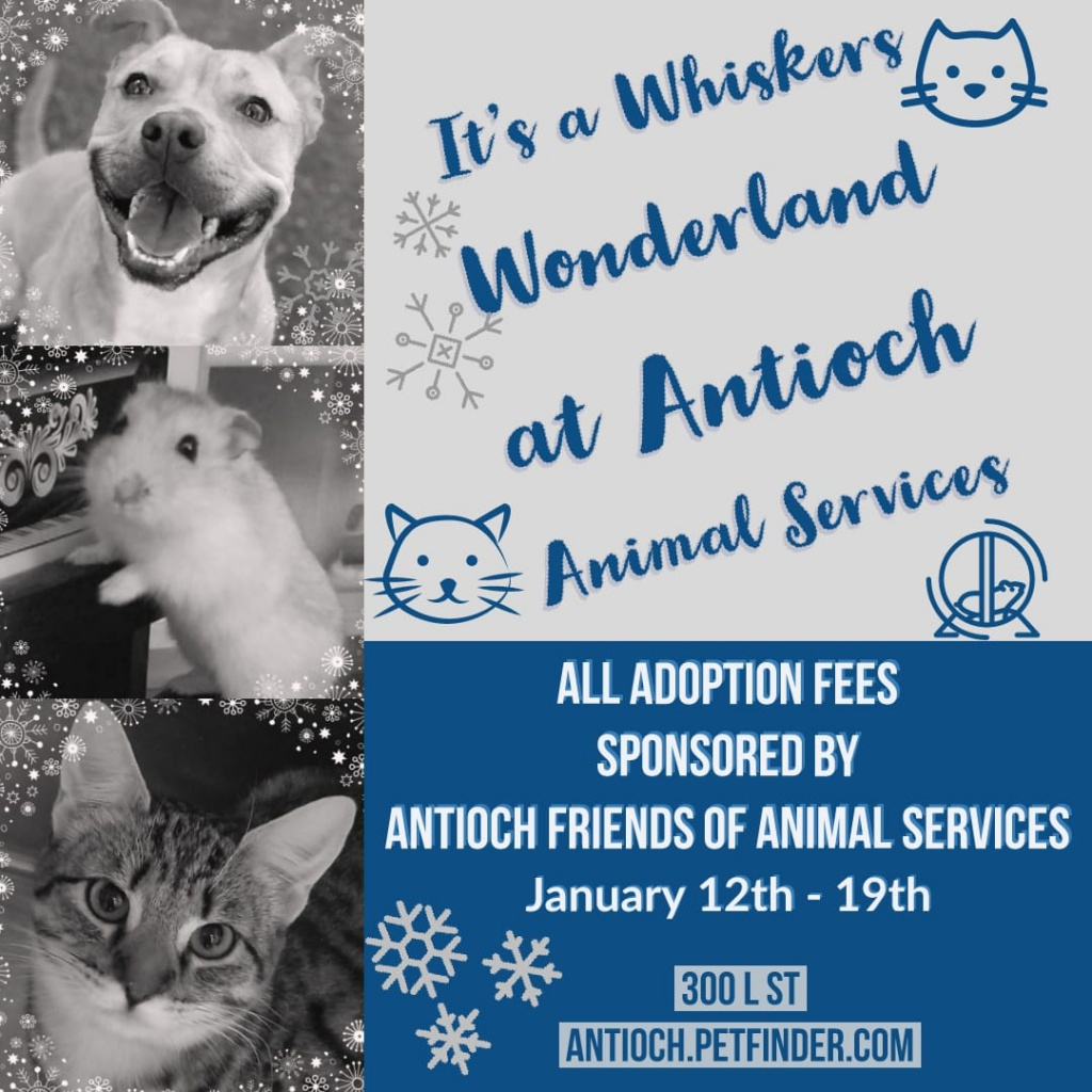 Antioch Animal Services Free Adoption Week poster