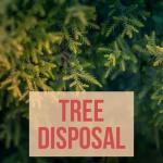Tree Disposal