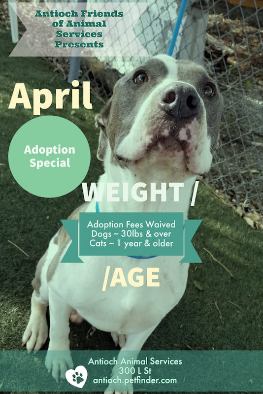 Antioch Friends of Animal Services is pleased to announce they will be sponsoring adoption fees for all dogs over 30 pounds, and all adult (older than one year) cats during the month of April 2019.