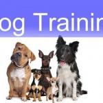 Bare Bones Basics Dog Training