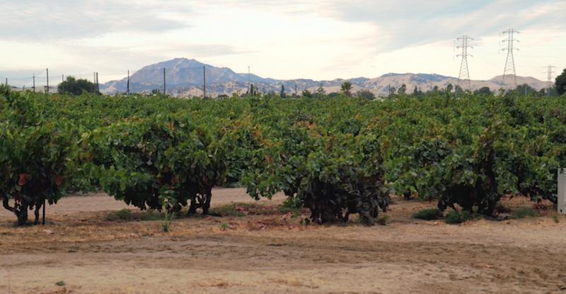 Evangelho Vineyards - Dry Farmed