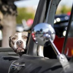 Hot Rods 4 Paws 2019