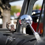 Hot Rods 4 Paws - Benefit Car Show 2019