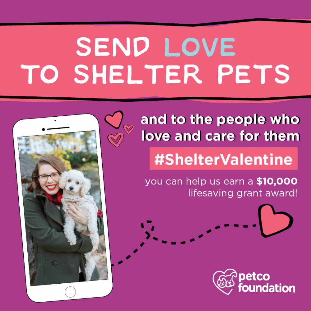 Shelter Valentine - Antioch Animal Service