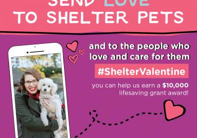 Shelter Valentine - Antioch Animal Service